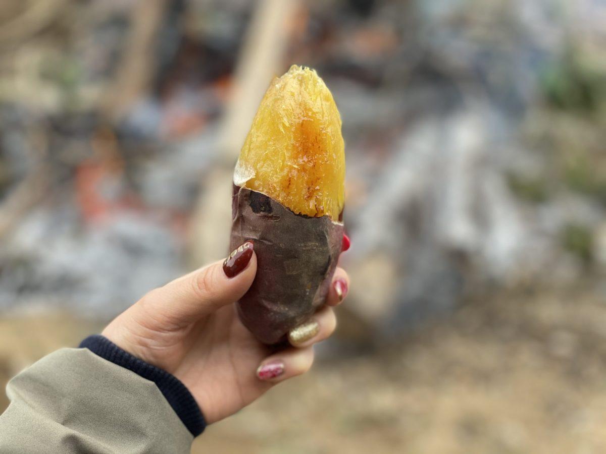 秋だ!さつま芋だ!モテビトさつま芋農家だ!